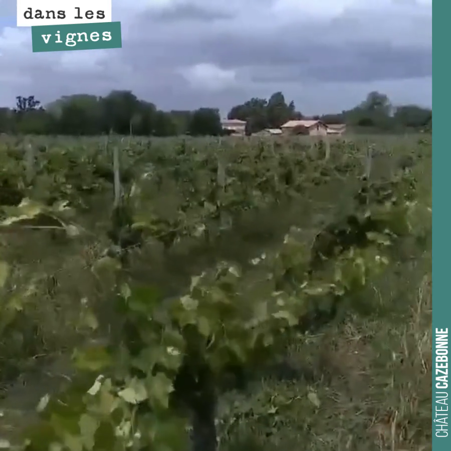 Le levage de la vigne