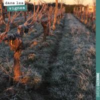 Tout savoir sur la vigne