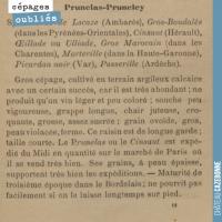 Le cépage Prunelas