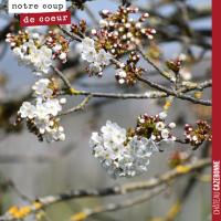 Des cerises et cerisiers