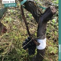 Le surgreffage de la vigne