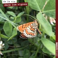 Les papillons dans les vignes