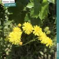 La flore dans les vignes