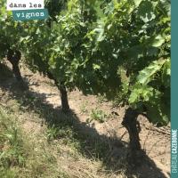 Gérer l'enherbement dans la vigne