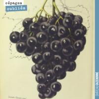Les cépages de Bordeaux