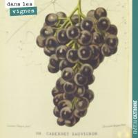 Le cépage Cabernet-Sauvignon