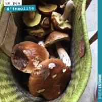 Des champignons dans les vignes