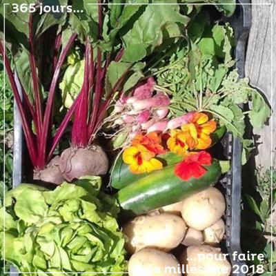 Une belle récolte de légumes, au jardin des vignes, à même les rangs de nos vignes. De bons légum...
