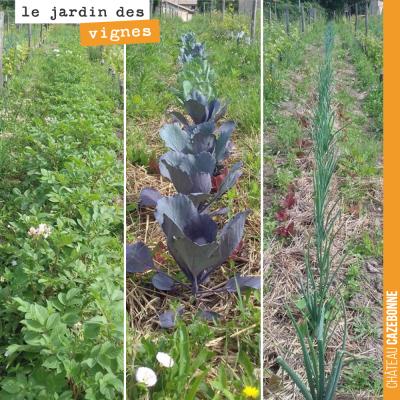 Des légumes à même nos rangs. Francis a planté ici des pommes de terre, du chou, des oignons... R...