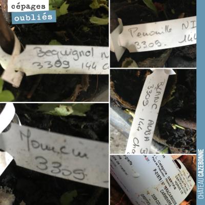 En voyant ces étiquettes sur les plants, nous ne pouvons pas nous empêcher de faire le rapprochem...