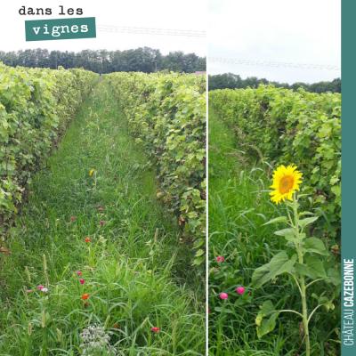 Nous avions fait des semis mellifères pour mettre des ruches sur le domaine avec un ami apiculteu...
