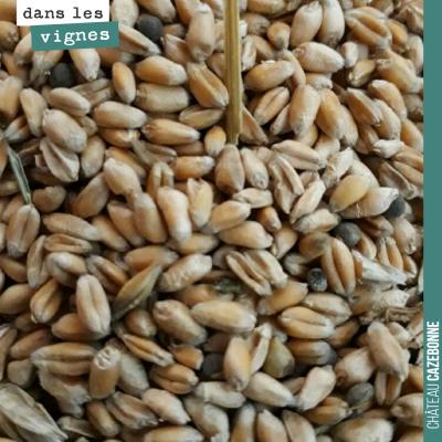 On a reçu ce jour des variétés de céréales anciennes pour semer sur nos parcelles en jachère : ba...