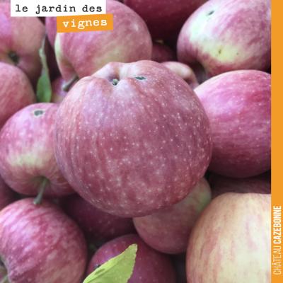 On ramasse les pommes dans le jardin. Des pommes Bio, bien sûr.