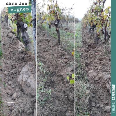 On a commencé à chausser la vigne pour l'hiver. On protège ainsi le cep et au printemps en déchau...