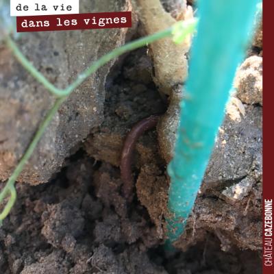 Quand en arrachant une mauvaise herbe, on découvre un vers de terre, juste à la surface, on se di...