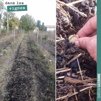 Francis repart sur la deuxième saison du jardin des vignes. Il a planté hier de l'ail dans les ra...