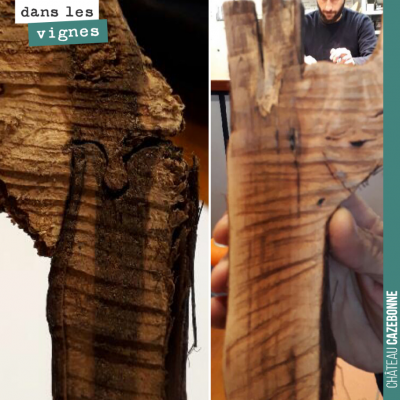 Greffe oméga versus greffe T-bud. Visite de Marc Birebent (de Worldwide Vineyards) au domaine pou...