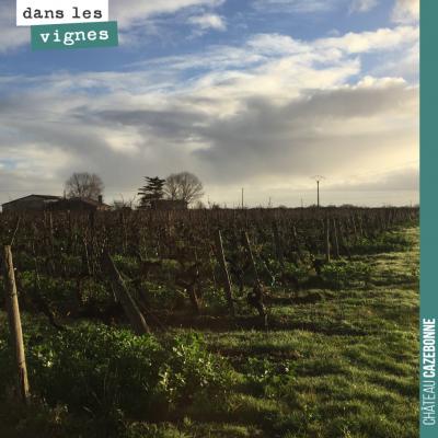 Lumières de l'hiver, dans les vignes. Un vert inimitable.
