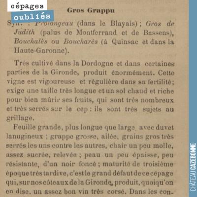 Ajourd'hui, faisons connaissance avec le Bouchalès, cépage autrefois très planté en Gironde, dans...