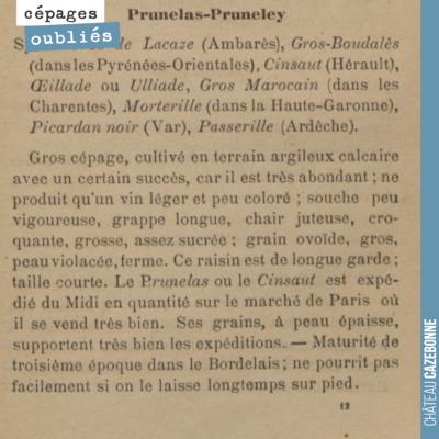 Ce cépage était bien présent en Gironde, mais il est là aussi, difficile de dire de quel cépage i...