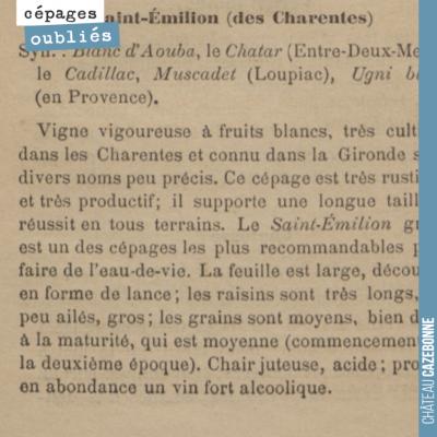 On est très heureux d'avoir replanté ce cépage blanc en Gironde. Il était très présent autrefois ...