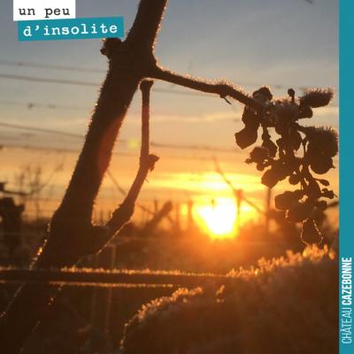 Quand le soleil se lève dans les vignes encore givrées...