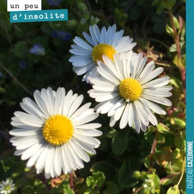 Comme dans la comptine : En été dans les prés, les oiseaux transpirent des pieds, et l'odeur des ...