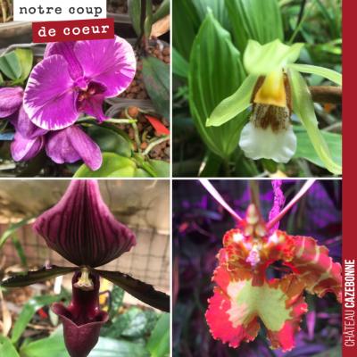 Aller à la rencontre d'un collectionneur d'orchidées et découvrir chez lui plus de 300 espèces d'...