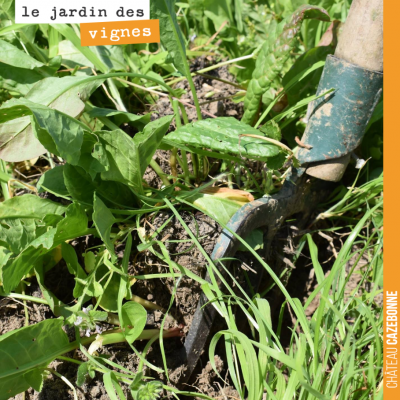 Le Jardin des Vignes ça peut rapporter... de l'oseille. Lorsque Francis a commencé à cultiver dan...
