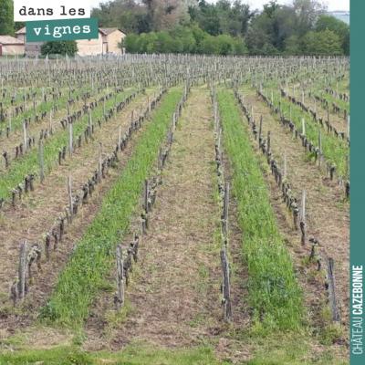 Les vignes sont bien propres cette année. On a réussi à ne pas se faire déborder. Le rang avec no...