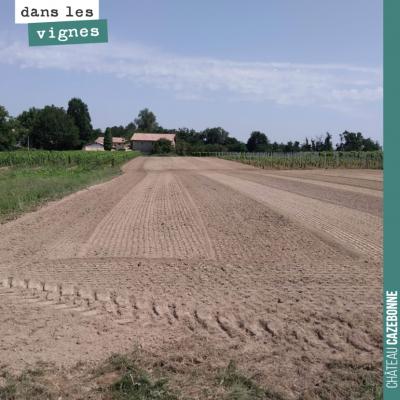 On a préparé les sols pour notre plantation de cépages oubliés. On a ajouté 30 tonnes de fumier p...