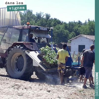 On complète les plantations de nos parcelles de cépages oubliés de l'année dernière. Pour certain...