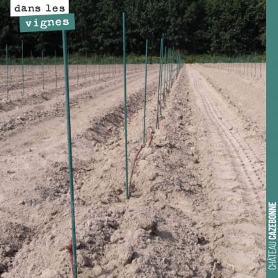 C'est sec, très sec sur les quelques que nous avons complété en plantation de cépages anciens. Il...