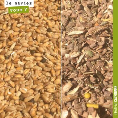 C'est pas tout de moissonner nos blés anciens, il faut le nettoyer de toutes les impuretés laissé...