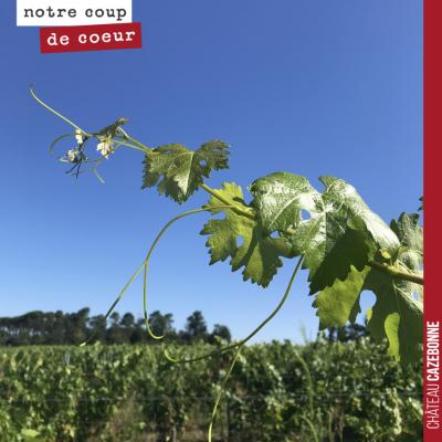 La vigne est magnifique cette année. Aucune attaque de mildiou. Un feuillage d'une très belle cou...