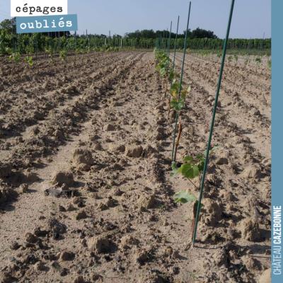 Nos plantations poussent dans de parfaites conditions désormais, avec de l'eau dans le sol et de ...
