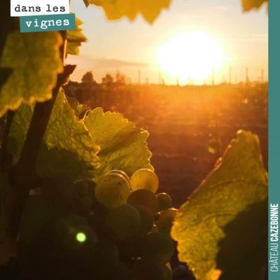 Lever de soleil sur les vignes.