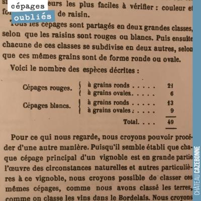 Cité dans La vigne dans le bordelais 1868. 49 cépages à Bordeaux, 27 rouges, 22 blancs... Ces cép...