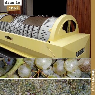 Le temps est venu après deux semaines de fermentation et macération de presser les deux amphores ...