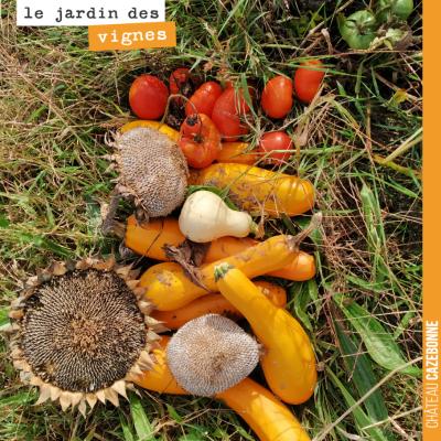 Derniers légumes récoltés au Jardin des vignes. Clap de fin. Triste.
