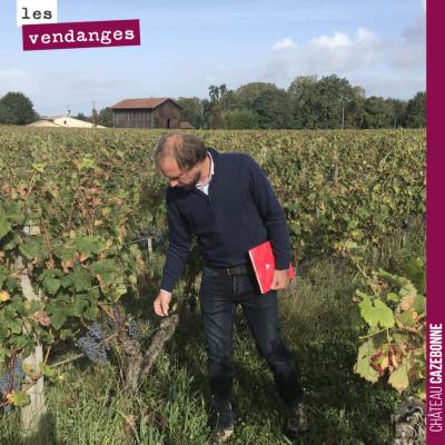 Nicolas, notre œnologue goûte les raisins pour déterminer la date des vendanges, parcelle par par...