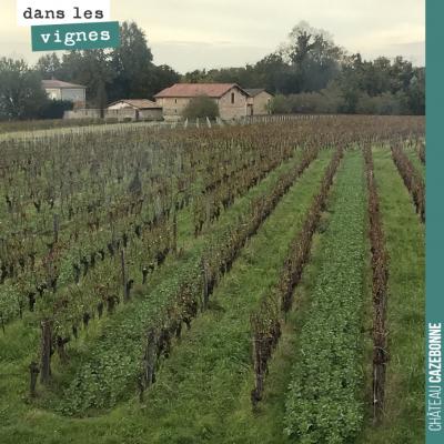 La vue de nos vignes depuis notre bureau. On voit bien les semis de couverts végétaux, un rang su...