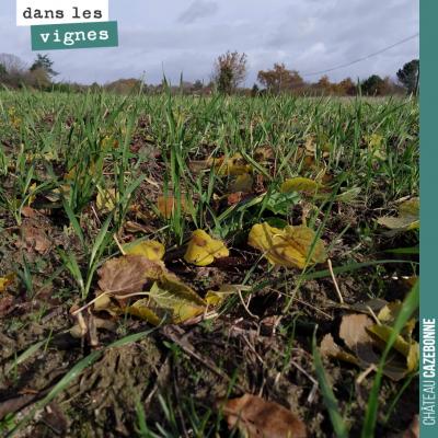 Nos semis de blés anciens ont été un succès. On a semé à temps, avant les pluies. Ces parcelles s...