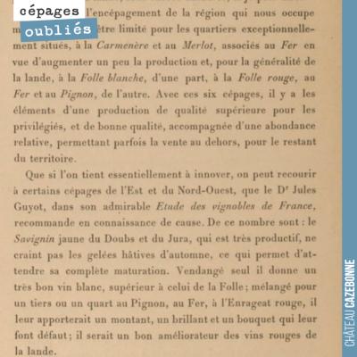 Recommandation d'encépagement pour le Sud Gironde, pour des sols de sables et alios, par F. Vassi...