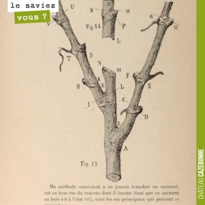 Dans son ouvrage 'D'une cause de dépérissement de la vigne et des moyens d'y porter remède (1887)...