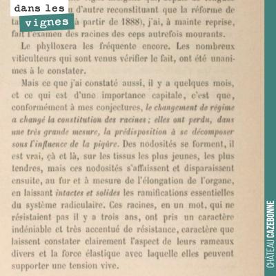 R. Demeizeris constate en 1888 que la résistance de la vigne au phylloxéra est améliorée si la ta...