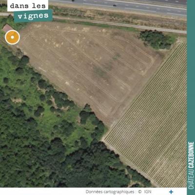 Notre îlot de Couet, sur le plateau de Graves de Cazebonne. C'est ici que nous avons replanté une...