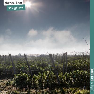 Photo de Antonin Bonnet dans nos vignes pour le site Viamo.fr