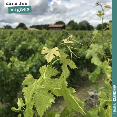 La vigne et ses vrilles est magnifique autour du plateau de Peyron cette année. Un plateau relati...