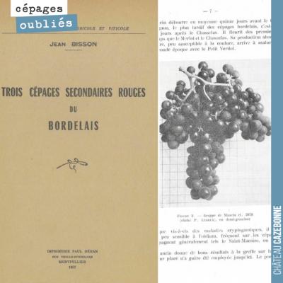Cet ouvrage de 1957 vante les mérites des cépages accessoires bordelais, ces cépages qui étaient ...